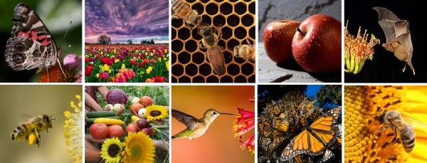 PollinateGrid