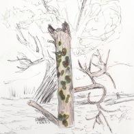 Viviane drawing 3