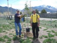 Tree-planting-2