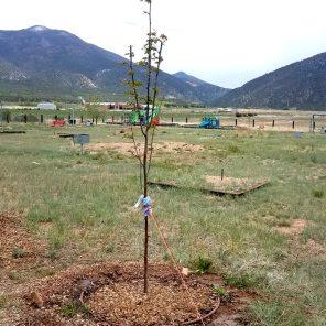 TreeStakedOnDrip