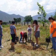 Group planting Maple tree near the park swings for future shade, photo by Claire Coté
